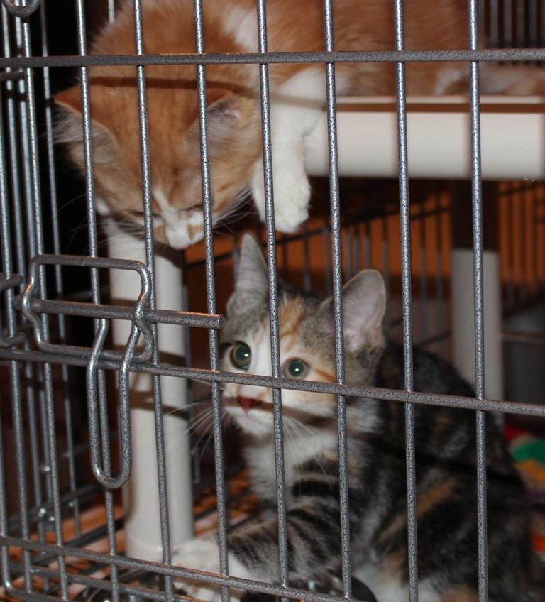 Washington Humane Society Kittens at the Racetrack Road Trade Show